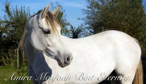 Our eternal beauty and Kadiah´s first foal: <br>  Amira Moujaan Bint Eternity (Eternity Ibn Navarroné-D x Kadiah)